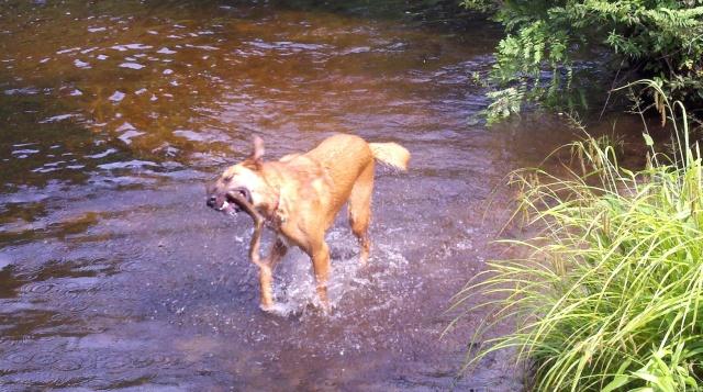 Summer Fetch